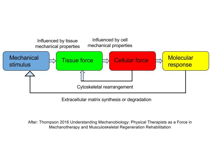 MECHANOTHERAPY - The use of MECHANICAL FORCE to ENHANCE TISSUE REMODELING