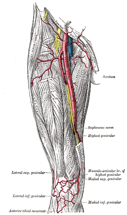 The Indirect Head of Rectus Femoris