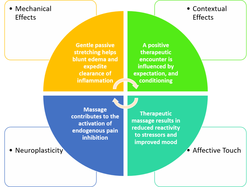 Proposed Mechanisms for Massage Therapy