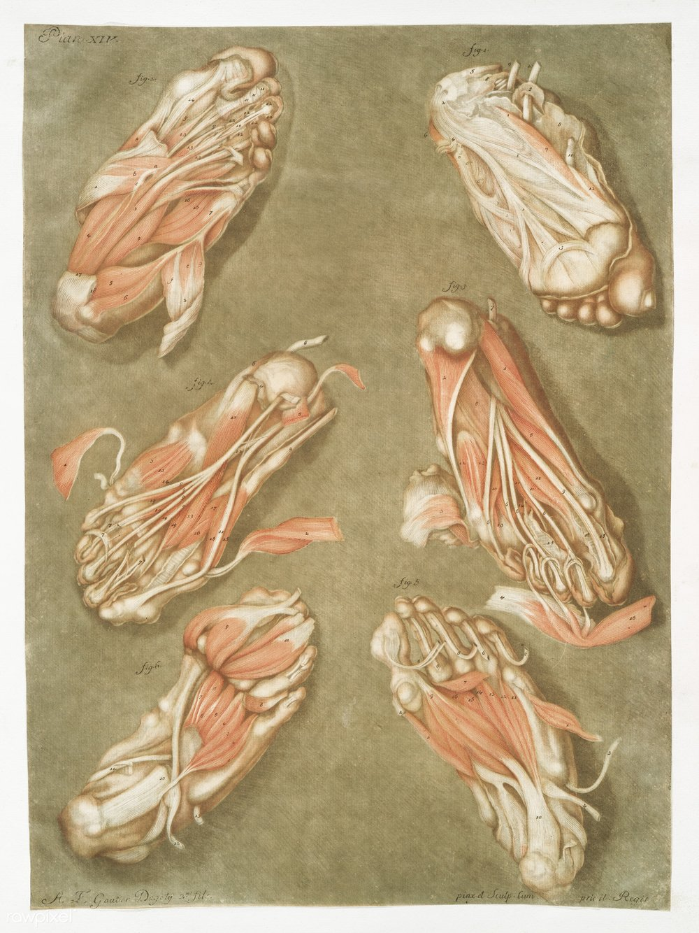 ARTIST -ARNAULD-ELOI GAUTIER-DAGOTY (1741-1771)