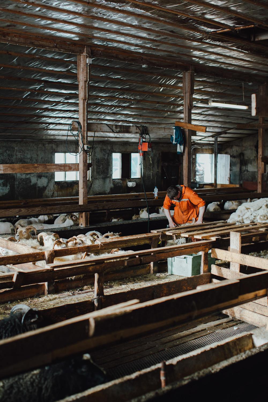 MikeSeehagel-Iceland-SheepFarm-16.jpg