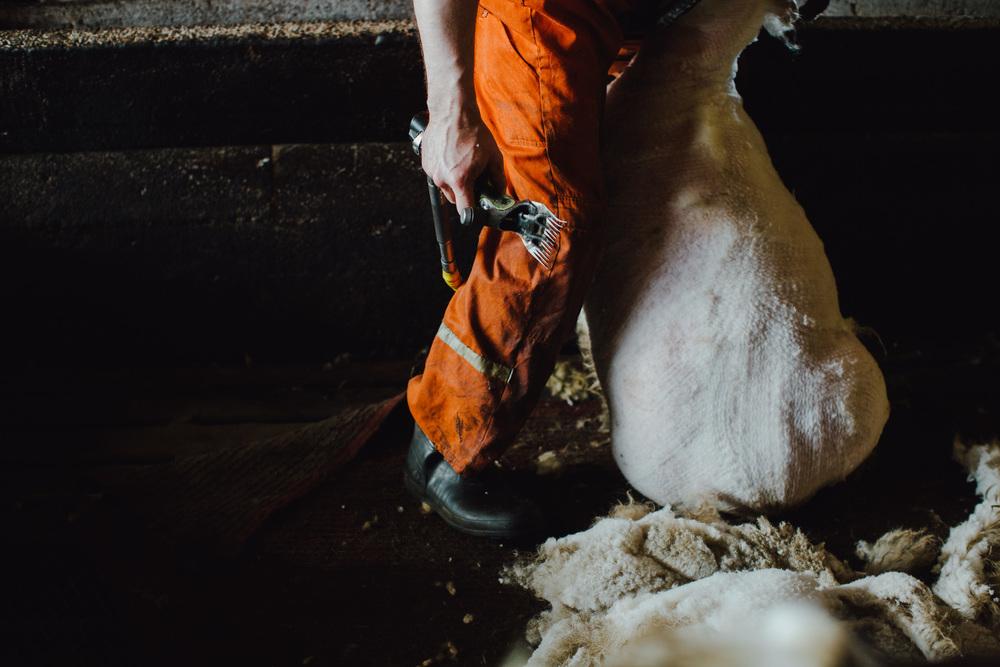 MikeSeehagel-Iceland-SheepFarm-03.jpg