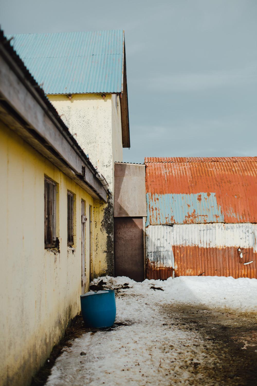 MikeSeehagel-Iceland-SheepFarm-23.jpg