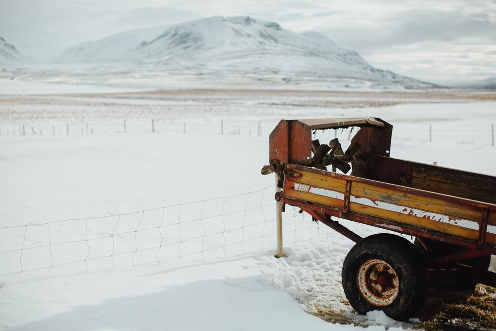 MikeSeehagel-Iceland-SheepFarm-24.jpg