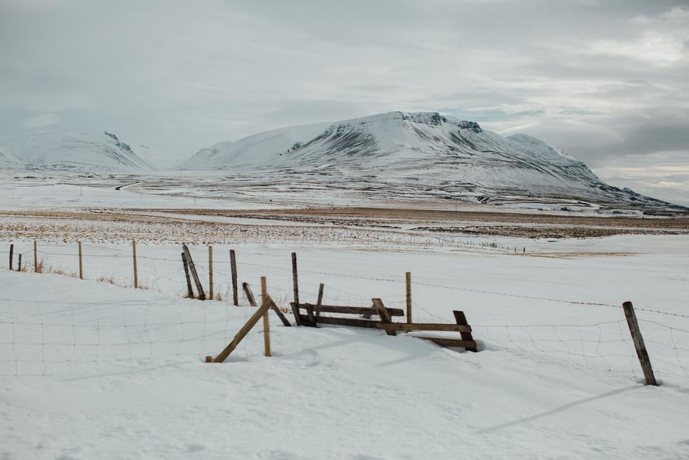 MikeSeehagel-Iceland-SheepFarm-26.jpg