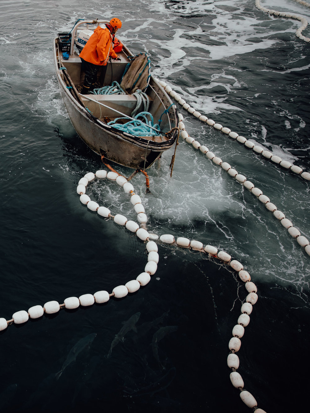Marine Stewardship Council • Sustainable Fisheries