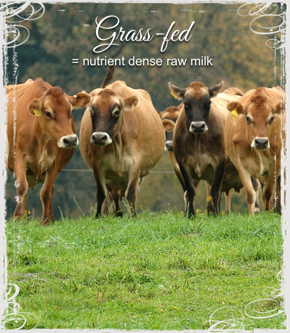 grass-fed raw milk australia buy melbourne sydney