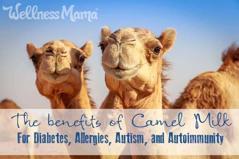 Image:     The benefits of Camel Milk  via Wellness Mama. The author says she prefers it raw.