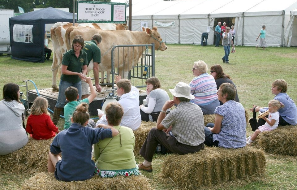 Image:    Rosie interacting with her audience at the Hurdlebrook Milking Cow Show.