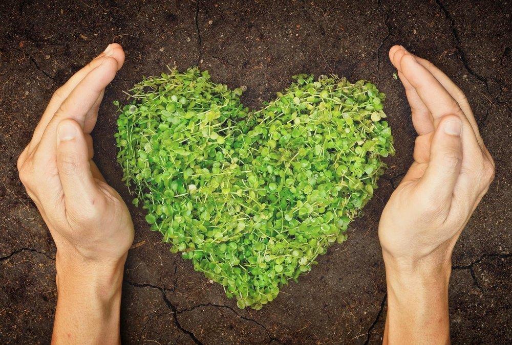 AdobeStock_61148453 green heart.jpg