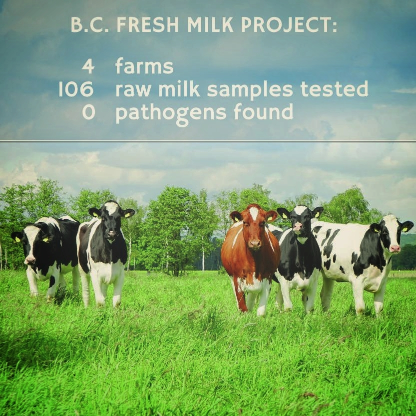 BC Fresh Milk Project.jpg