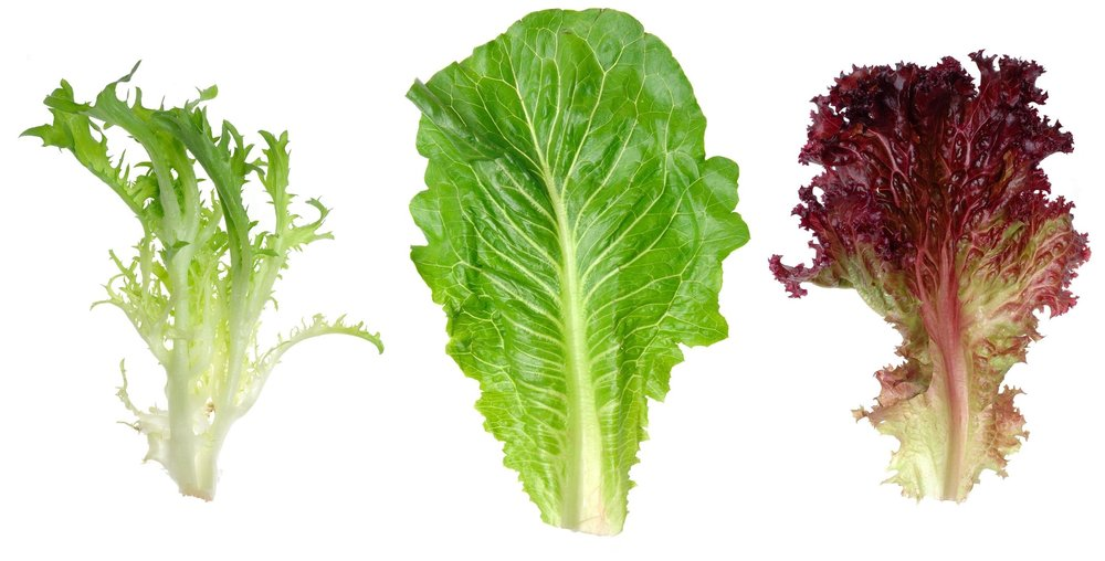 How can you ensure that your leafy greens are sustainably farmed? How can you ensure that it contains all the beneficial microbes from healthy soil ( example ) and not the potentially harmful bacteria via manure from high grain farming operations? The lettuce in your fridge may look pretty but is it good for you?If it was fertilised by manure from healthy, grass-fed animals in  organic and regenerative systems  it is likely to be the better and safer option. When there is more biology (good microbes) in the soil, this enables the plants to take up more minerals and nutrients. This is worth advocating for.