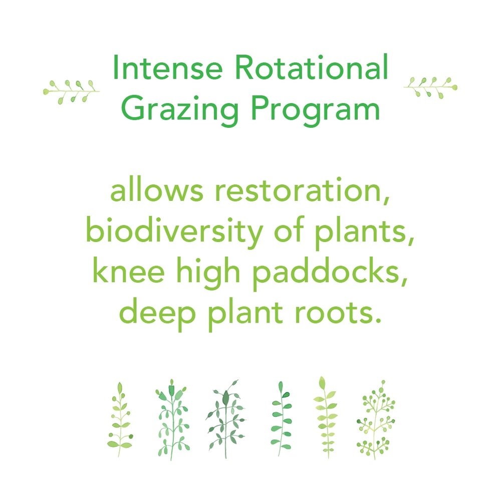 Intense Rotational Grazing Program 2.jpg