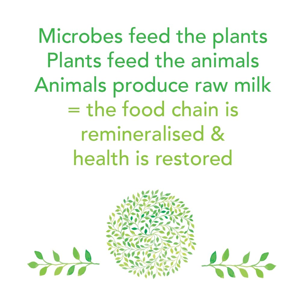 Microbes feed the plants.jpg