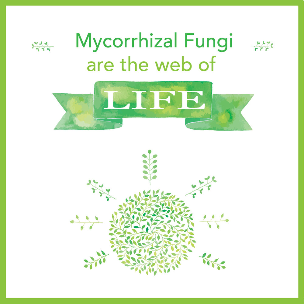 Mycorrhizal.jpg