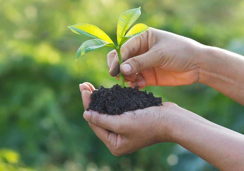 AdobeStock_112715506 soil and plant.jpg