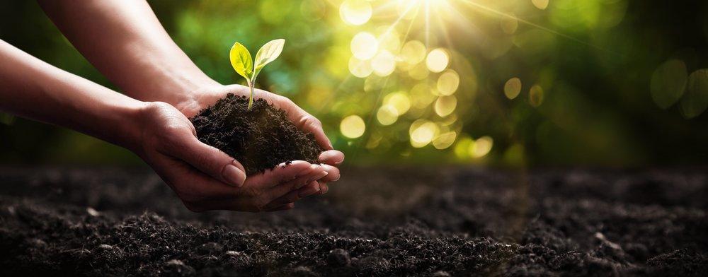 AdobeStock_197386409 soil and plant.jpg