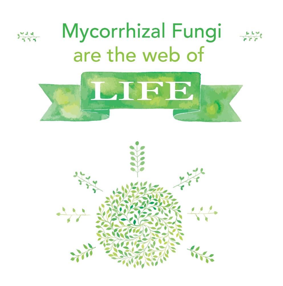 Mycorrhizal fungi in Australia soil microbes