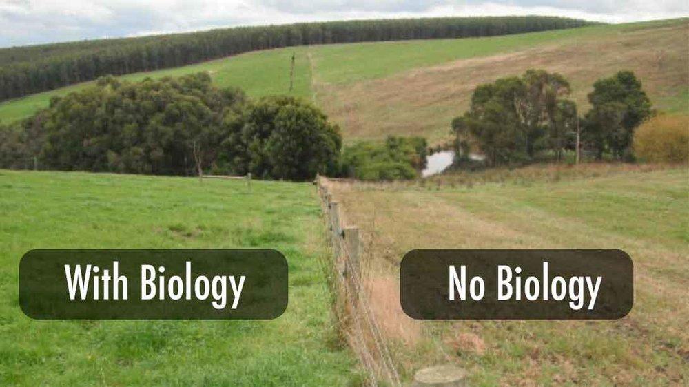 Image:   via  www.soilfoodweb.com
