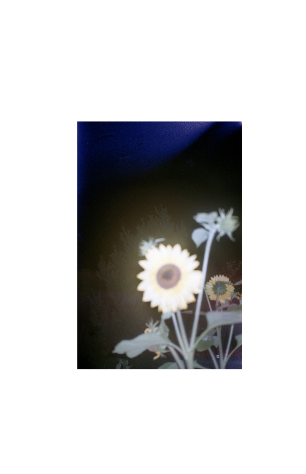Untitled-1flowersama.jpg