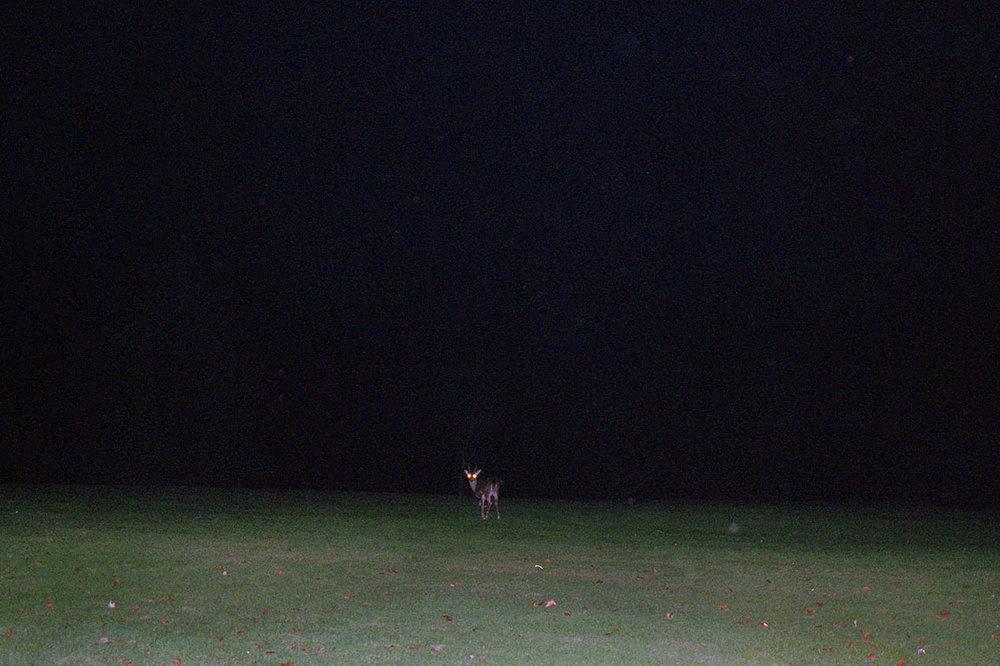 deer edit copy.jpg
