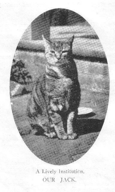 College cat Jack, 1922