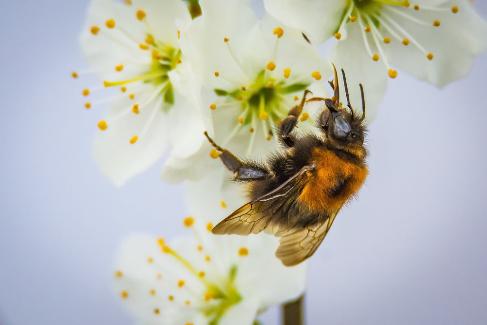 polination bee.jpg