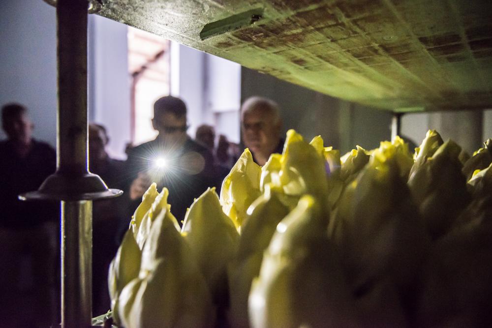 Smaakhoeve-kampenhout-foto Raf Lehaen-26 - Lowres.jpg