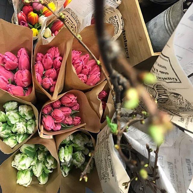 Tulpaner, vide, körsbärskvistar och mycket mer hittar ni hos @tellusblommor som har öppet hela helgen.🌸 Välkomna!