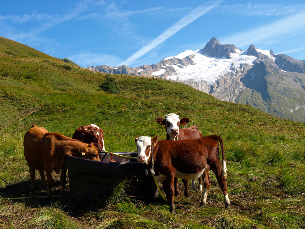 CH171067-uno-scorcio-del-Monte-Bianco-nei-pressi-de-la-Ville-des-Glaciers.jpg