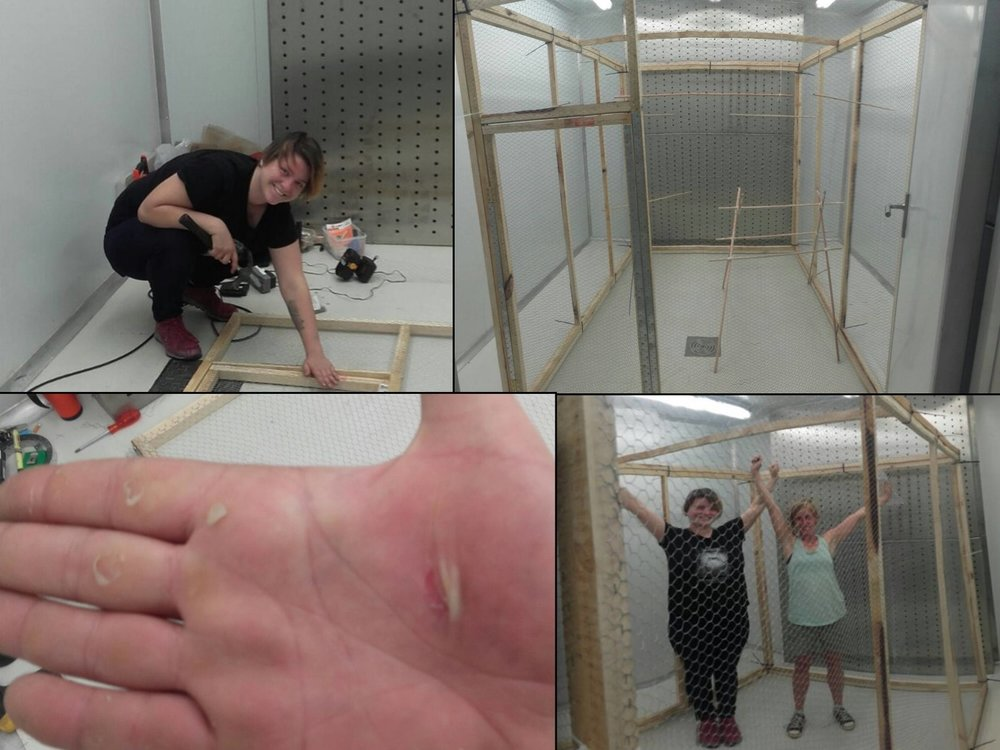 No pain, no gain: margaux and samantha complete the collapsible aviaries at the temperature controlled facility in pretoria