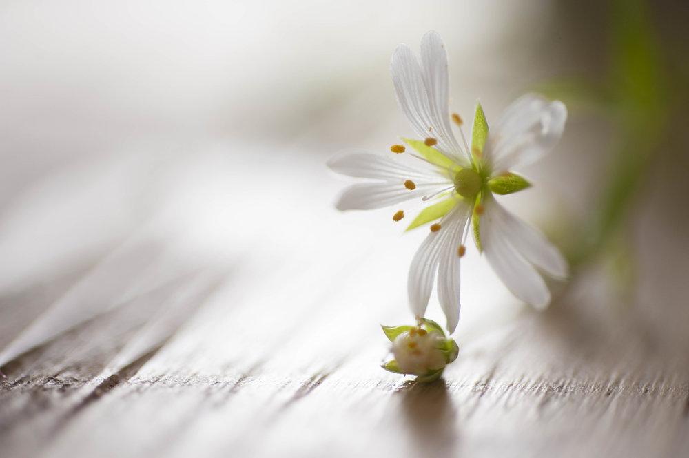 spring-illusion_(1_sur_1).jpg
