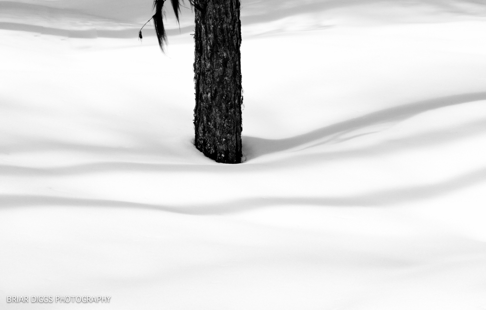 B&W ELEMENTAL BEAUTY-69.jpg