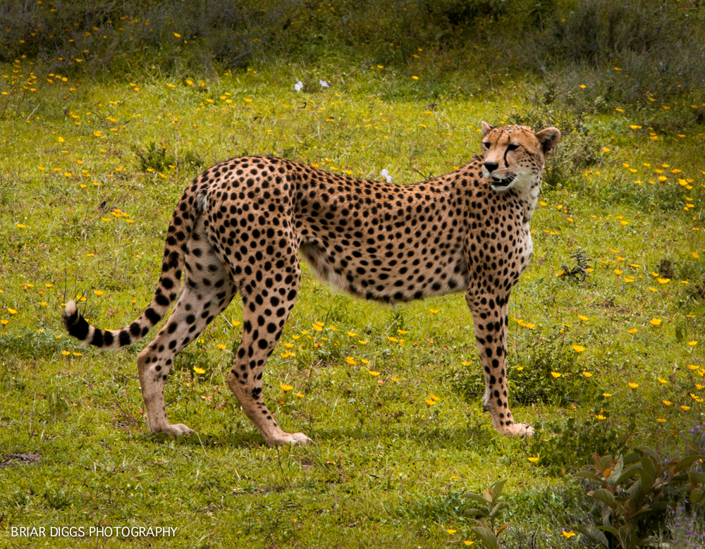 TANZANIAN ANIMALS-3.jpg
