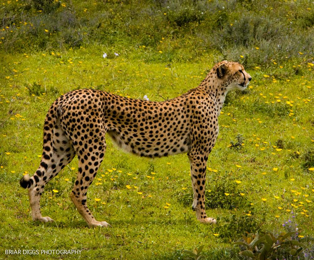 TANZANIAN ANIMALS-2.jpg