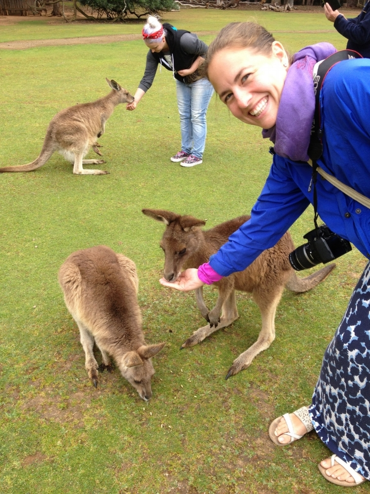 feeding kangaroos at the Tasmanian Devil Conservation Park