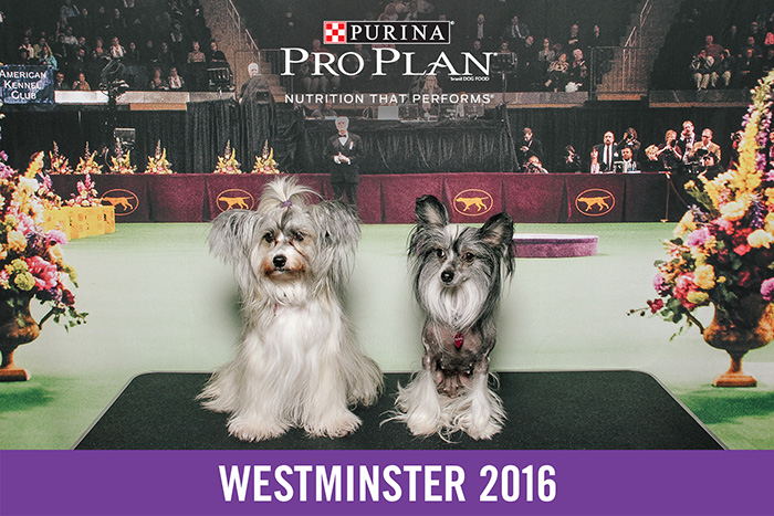 westminster-smilebooth-1.jpg