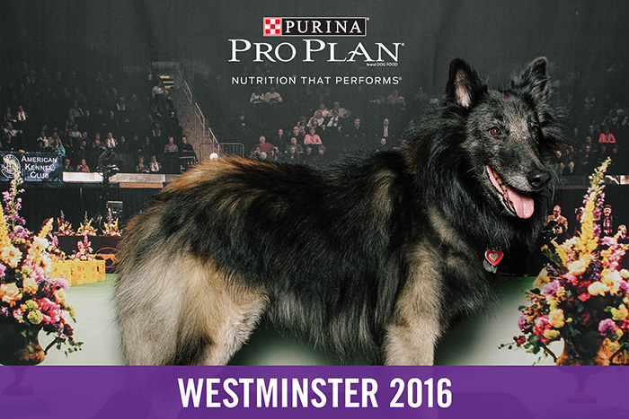 westminster-smilebooth-4.jpg
