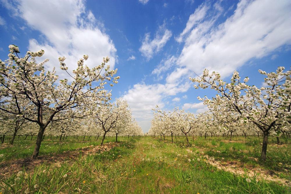 Slavonija_agriculture0003.jpg