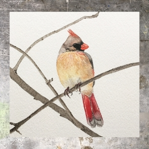Cardinal - 5 x 5 on 140# Arches watercolor. Part of the 5 x 5 series. Available for purchase. $45 Found in my shop.