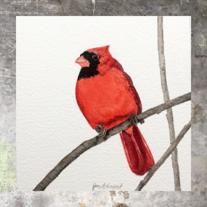 Male Cardinal - 5 x 5 on #140 Arches watercolor. Part of the 5 x 5 series. Available for purchase. $45 Found in my shop.