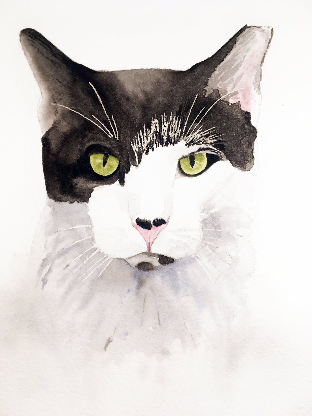 Jackthecat.jpg