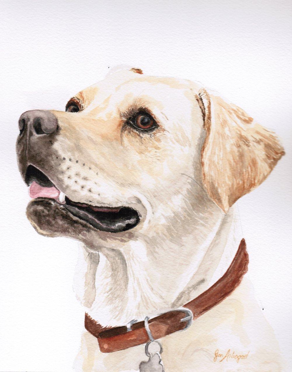2017theHelper-Labrador.jpeg