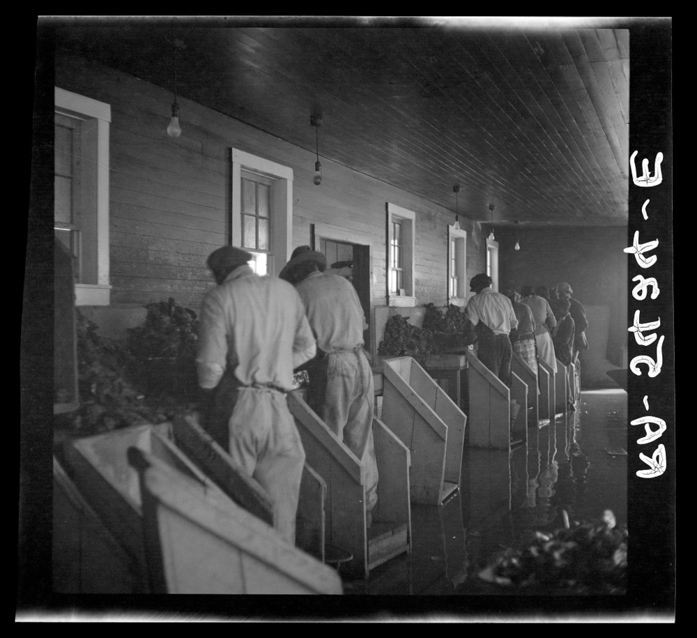 Oyster shuckers, Rock Point, Maryland. Image from the Library of Congress collections.