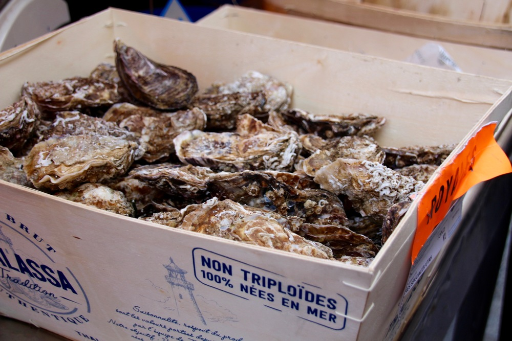 Although as in the Chesapeake, triploid oysters are popular among oyster growers for their ability to grow quickly and resist disease (in fact they make up 15-20% of the oyster market), the French are wary of them.