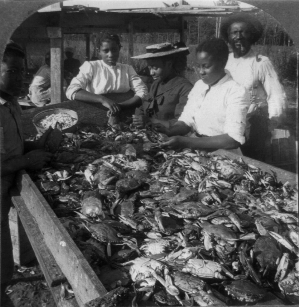 "Summertime, and the living is easy— especially if its the Land of Pleasant Living. Crabs are Chesapeake tradition, and this 1905 photo of crab pickers shows that's nothing new. Crab sizes, however, definitely have— just one of the monster jimmies in this picture would fill out a pretty hefty crabcake!   ""Picking Crabs for Market on the Banks of the Chesapeake Bay, 1905."" Stereograph image from the Library of Congress Collections."