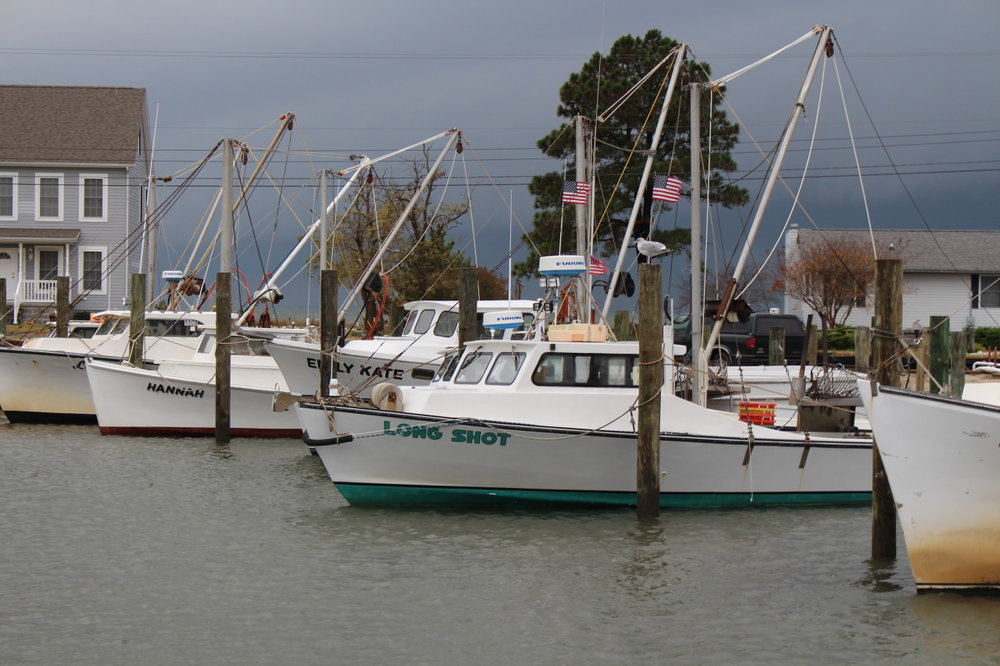Storm clouds hang over workboats rigged for oystering at a marina in Chance, Maryland. One of the traditional fishing communities of Somerset County on Maryland's Eastern Shore, watermen here have been working through economic depressions, environmental challenges, and radical changes in regulation. Though considerably smaller than in year's past, the fleet still leaves in the morning to harvest whatever is seasonally available, up to the chance of tide, wind, and timing.    Image by author.