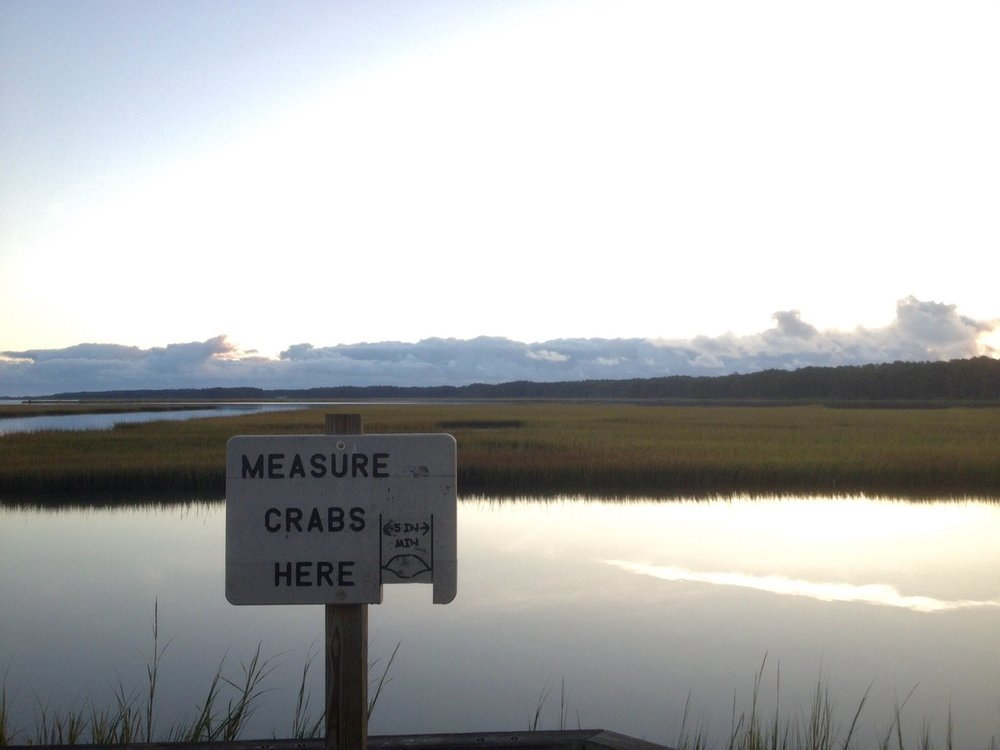 Seen on the bridge to Assateague Island, where so many locals try their luck chicken-necking off the bridge for crabs that there are permanent crab-measuring stations at intervals. Only in the Chesapeake!