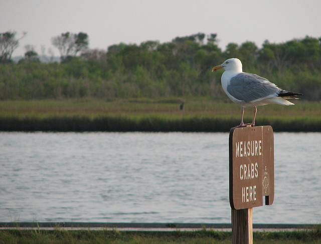 The Sheriff of Assateague Island  by  Big Mike 42  on Flickr.