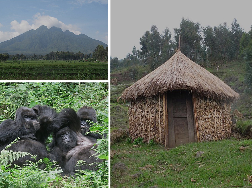Virunga Moountain; a traditional home, and the gorillas of the mist.